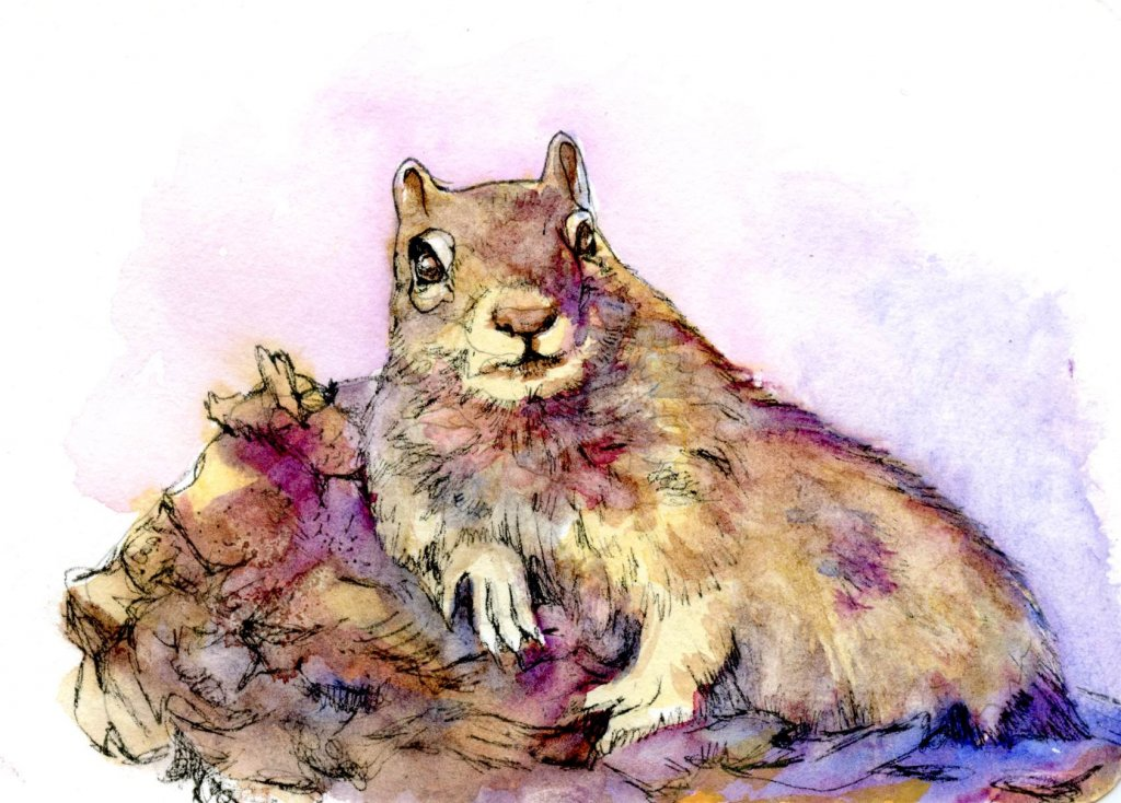 Okay I admit it. My 'chipmunk' is actually a Golden Mantled Ground Squirrel. I couldn&#8