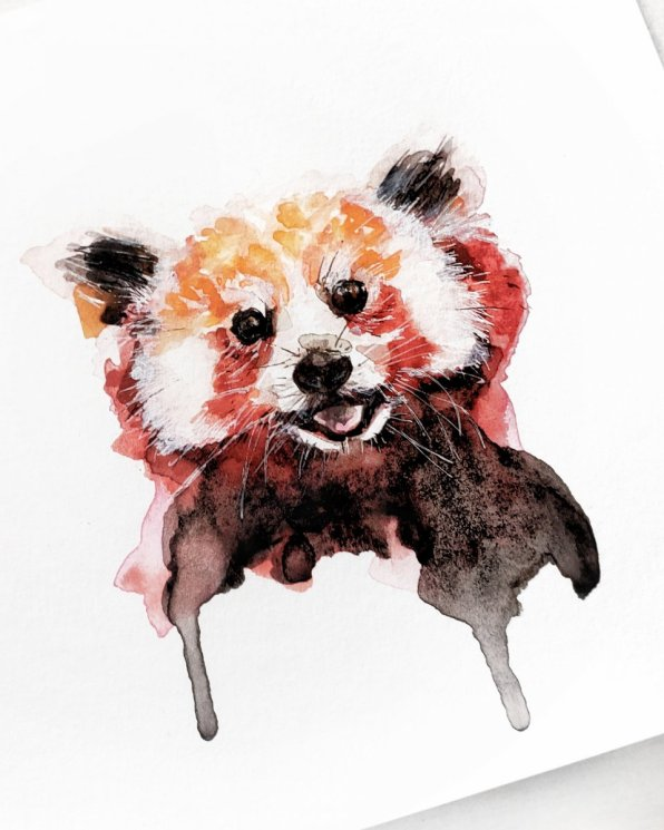 Red Panda Watercolor Painting by Jenny Tran