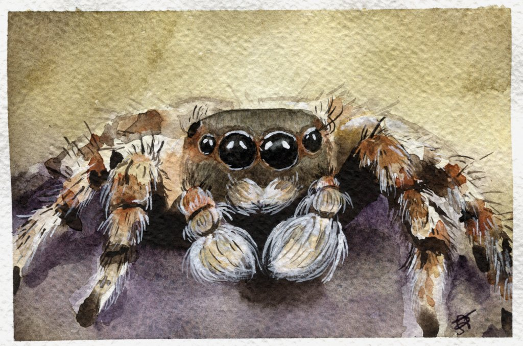 Spider Watercolour Painting