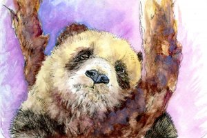 #Doodlewash Prompt-Furry Friends. Brown & White Panda. Did you know that on rare occasions, a pa