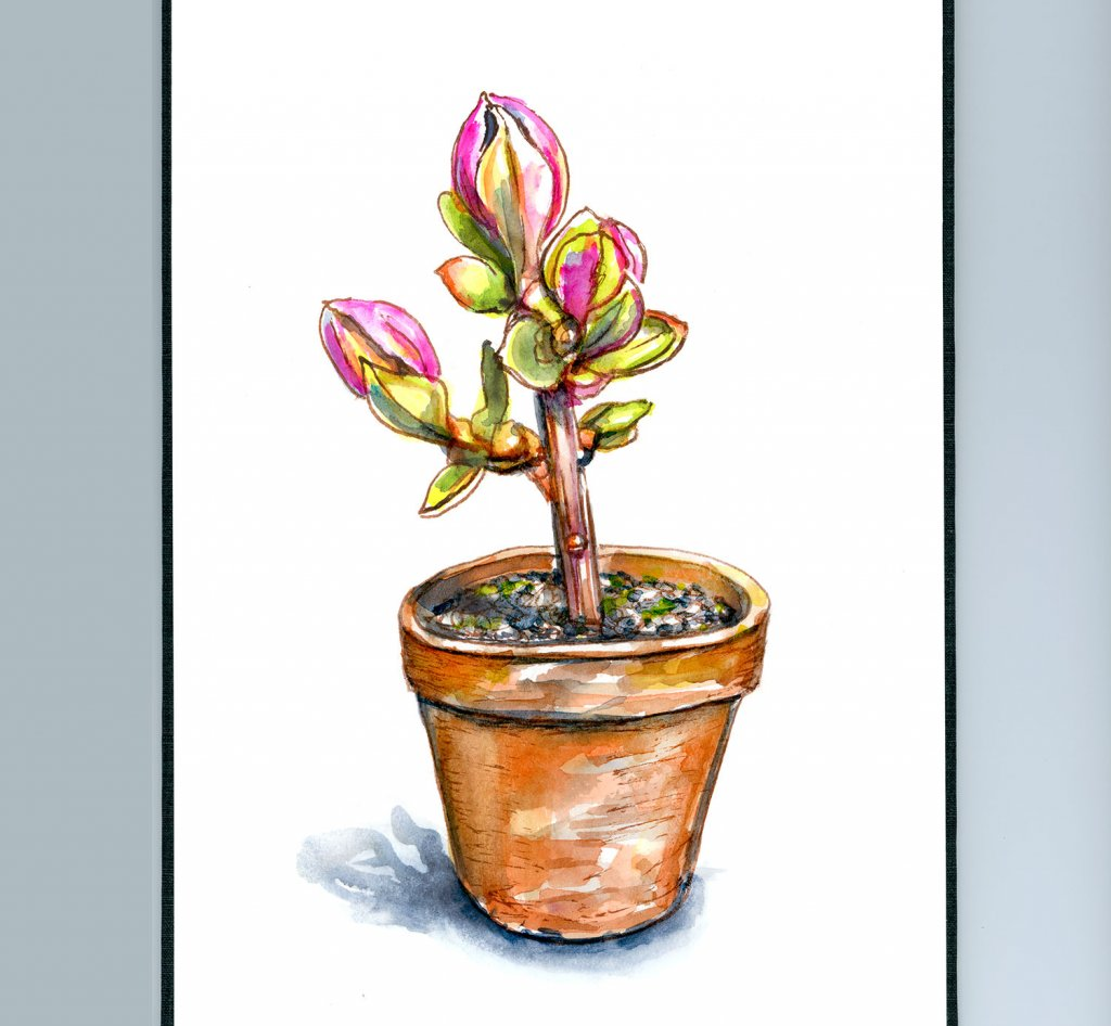 Sprout Budding Flowers In Terra Cotta Pot Watercolor Illustration