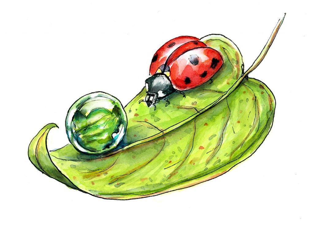 Ladybug Leaf Morning Dew Drop Watercolor Illustration