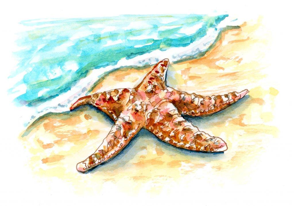 One Little Starfish ~ Doodlewash®