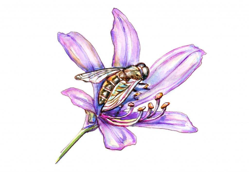 Bee On Purple Flower Watercolor Illustration