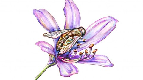 Bee On Purple Flower Watercolor Illustration
