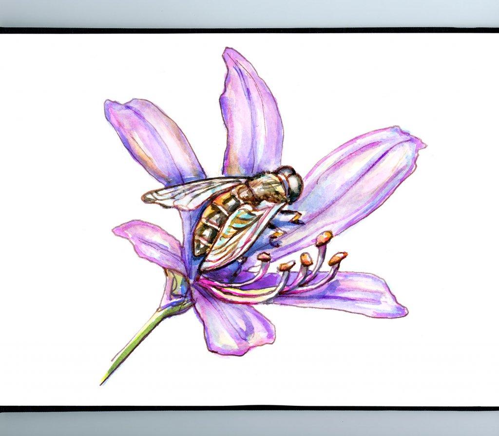 Bee On Purple Flower Watercolor Illustration Sketchbook Detail