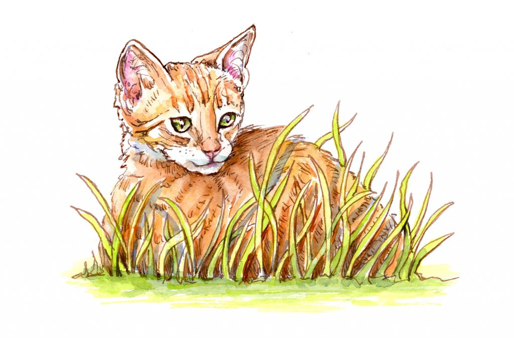 Cat Kitten Tabby In Grass Watercolor Illustration