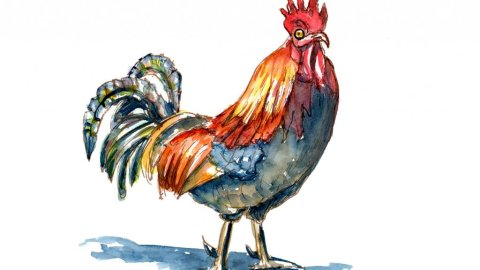 Rooster Cockerel Cock Colorful Watercolor Painting