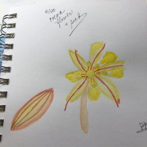 And a new month begins…I did a version of a cacao plant and seed… #doodlewashApril2020 d