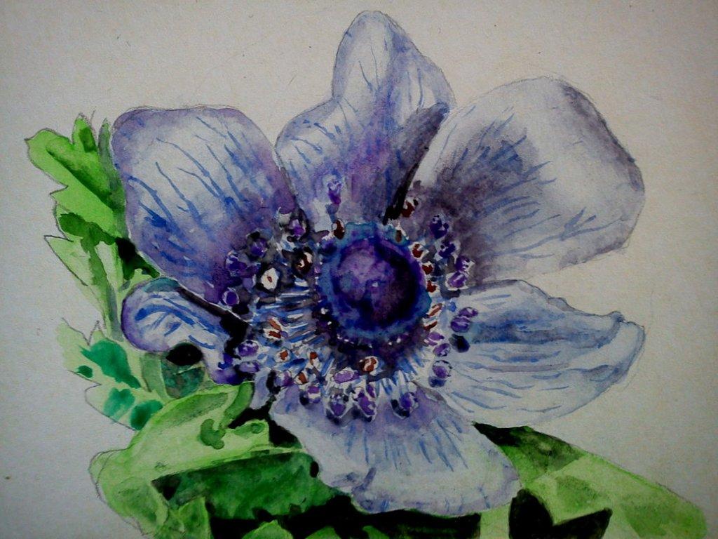 tried a study of a purple anemone purple_anemone_study_0