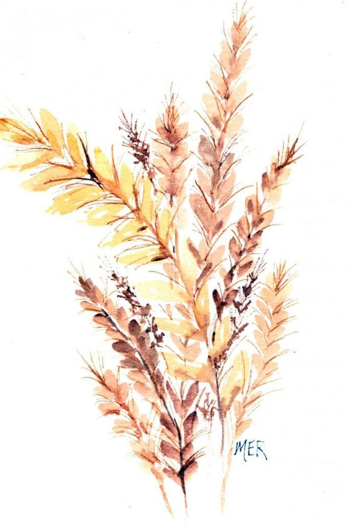 5/28/20 Wheat 5.28.20 Wheat img053