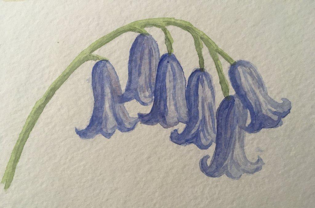 Day 25 bluebells B12D3C91-D16D-44A7-9B3F-73D78B5C9681