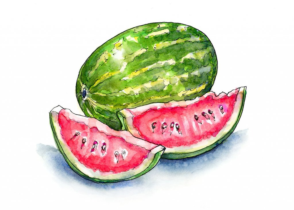 Watermelon And Slices Watercolor Illustration