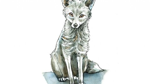 Silver Fox Watercolor Illustration