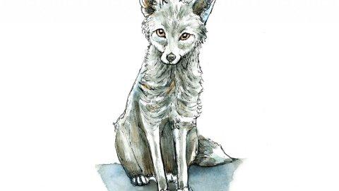 Silver Fox Watercolor Illustration