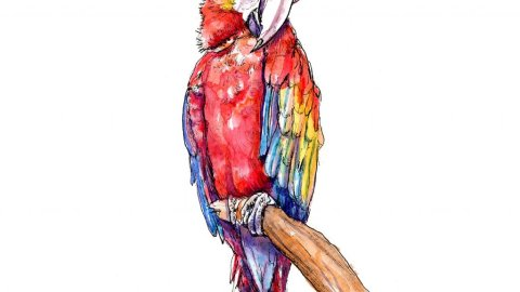 Scarlett Macaw Watercolor Illustration