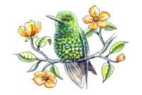 Hummingbird Western Emerald Orange Flowers Branch Watercolor Illustration