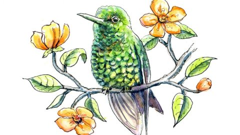 Hummingbird Western Emerald Orange Flowers Branch Watercolor Illustration