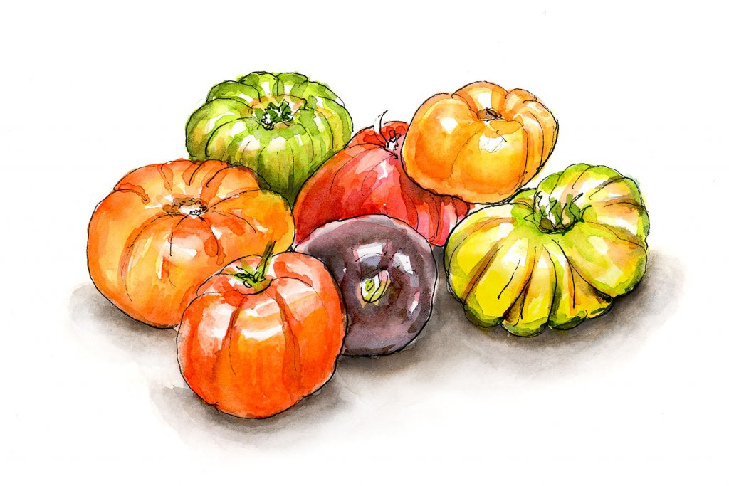 Heirloom Tomatoes Watercolor Painting