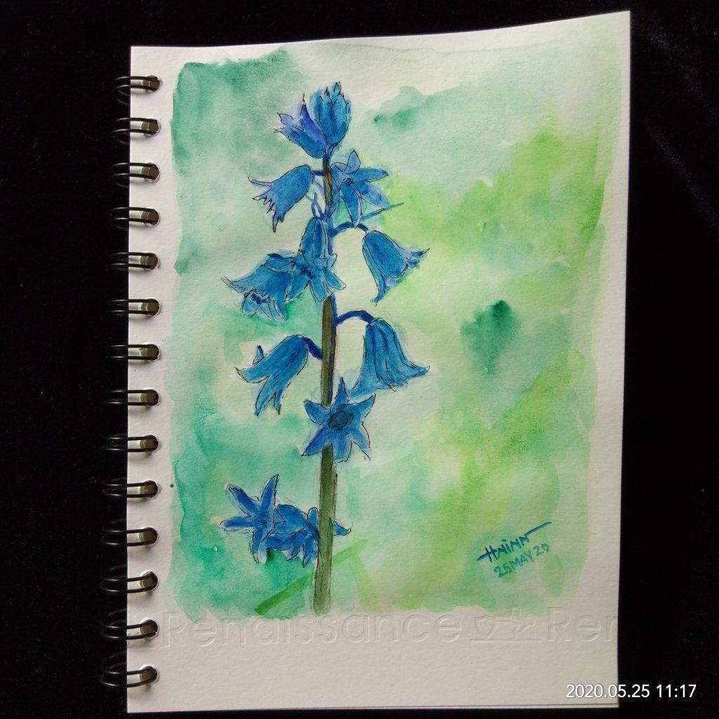 #doodlewashMay2020 #WorldWatercolorGroup #Beginner #25 #BlueBell #25May2020🎉 IMG_20200525_11
