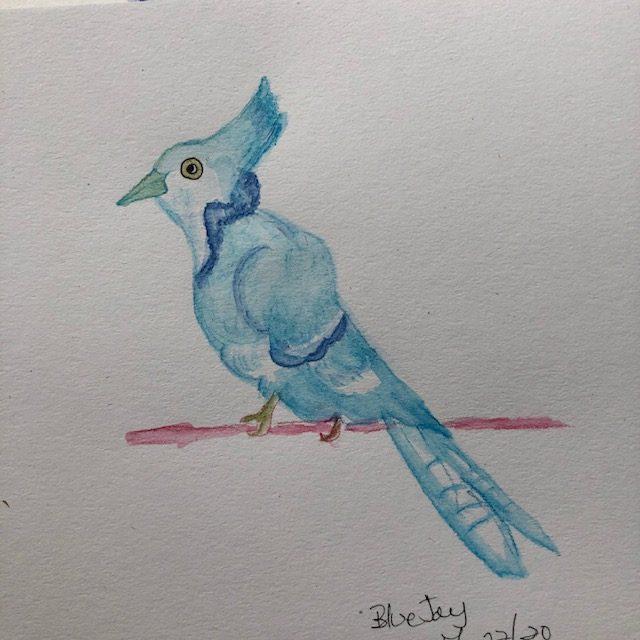 Bluebird in watercolor pencils IMG_4903