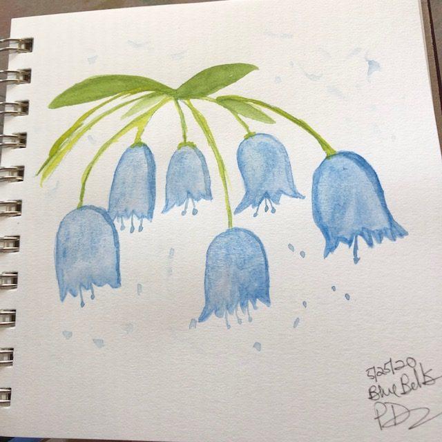 Bluebells 😃 IMG_4943