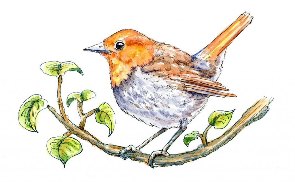 Japanese Robin komadori On Branch Watercolor Painting Illustration