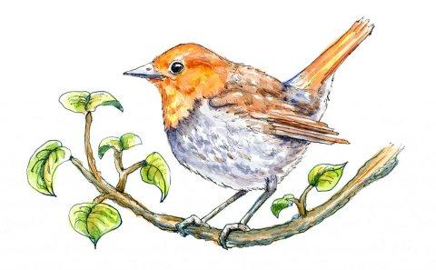Japanese Robin komadori On Branch Watercolor Painting Illustration