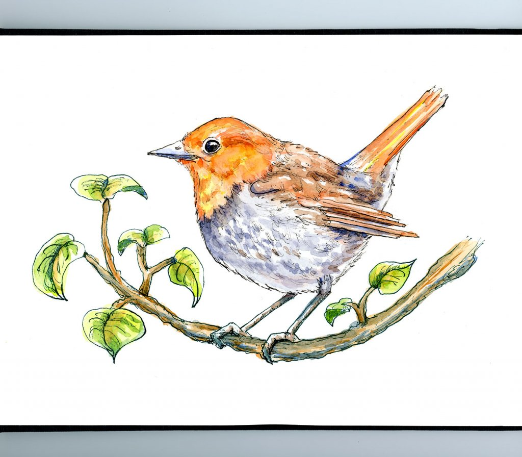 Japanese Robin komadori On Branch Watercolor Painting Illustration Sketchbook Detail
