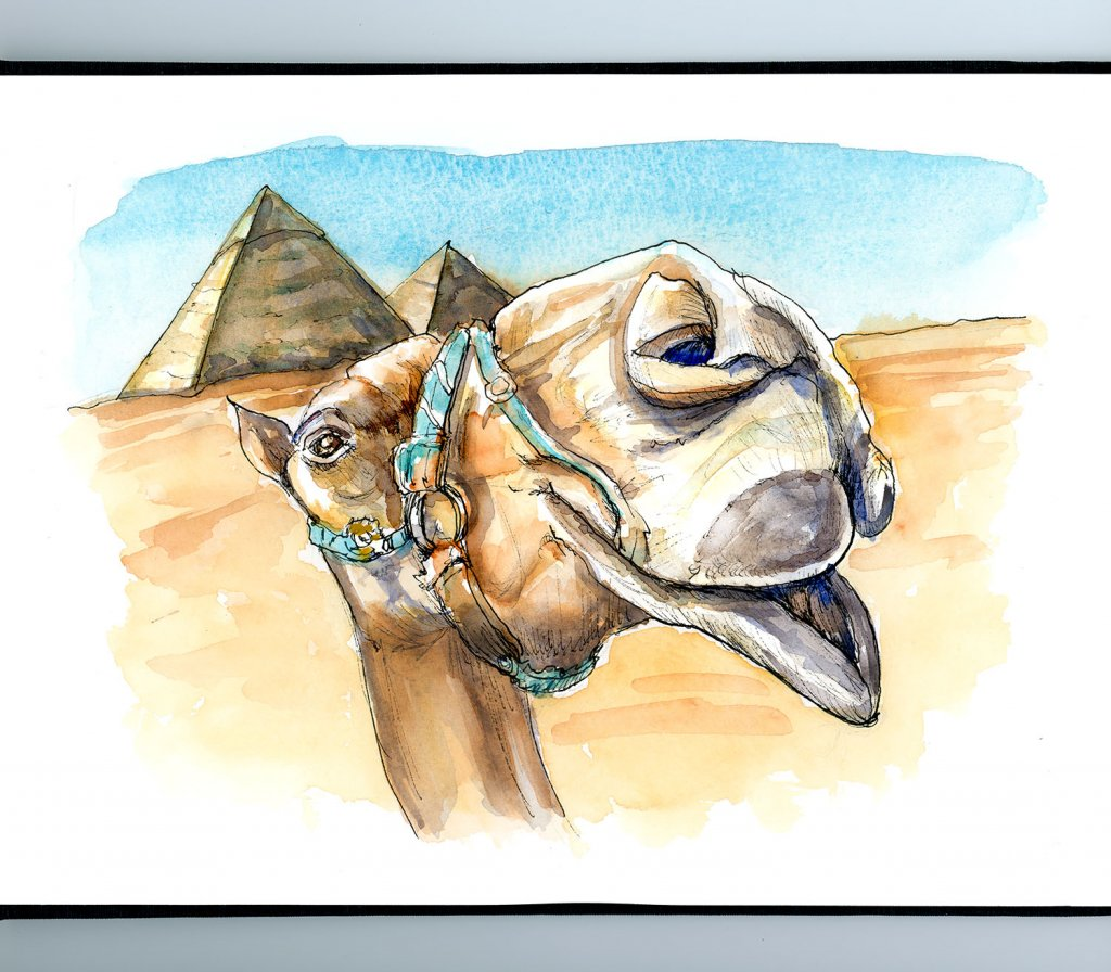 Camel Egyptian Pyramids Photobombing Watercolor Painting Illustration Sketchbook Detail