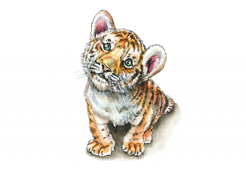 Tiger Cub Baby Sitting Watercolor Painting Illustration