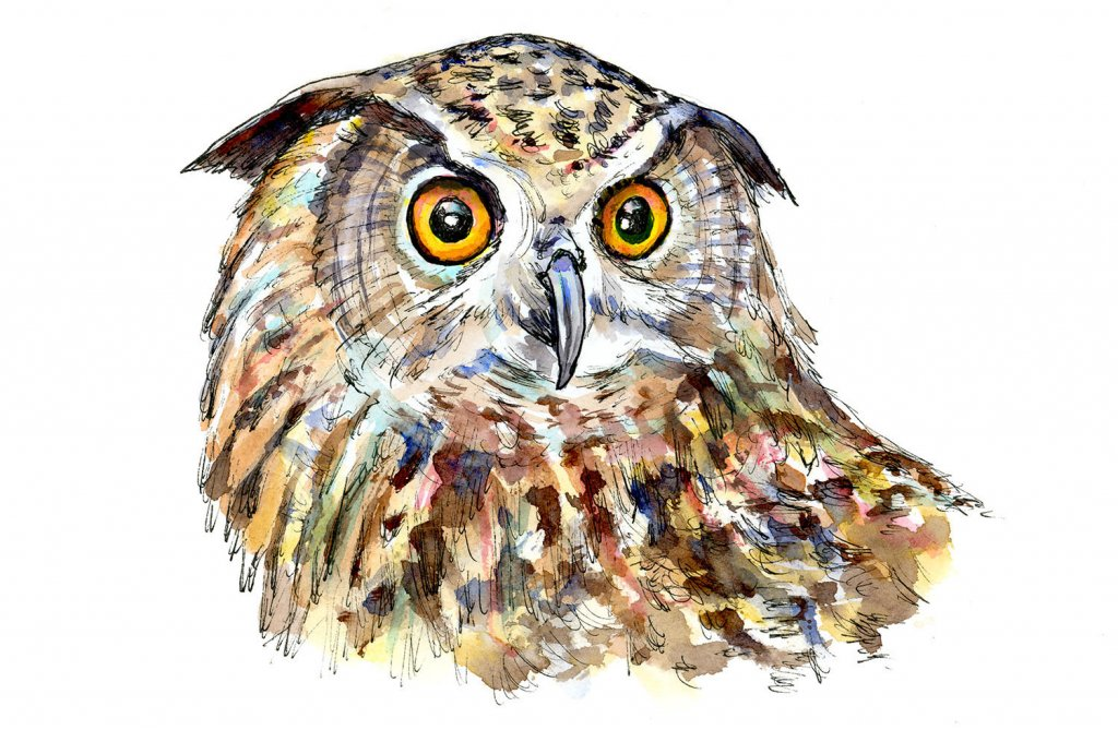 Owl Eyes Watercolor Painting Illustration