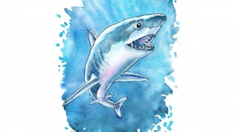 Great White Shark Watercolor Painting Illustration