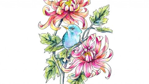 Chrysanthemum And Blue Bird Watercolor Painting Illustration