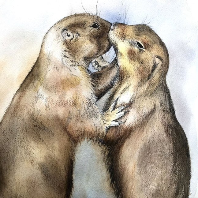 Prairie Dogs Kissing Watercolor Painting