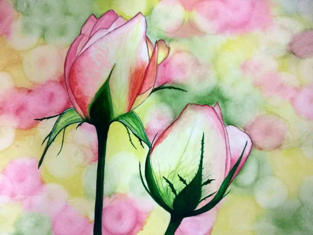 Rose Buds Watercolor Painting by Shilpi Gupta