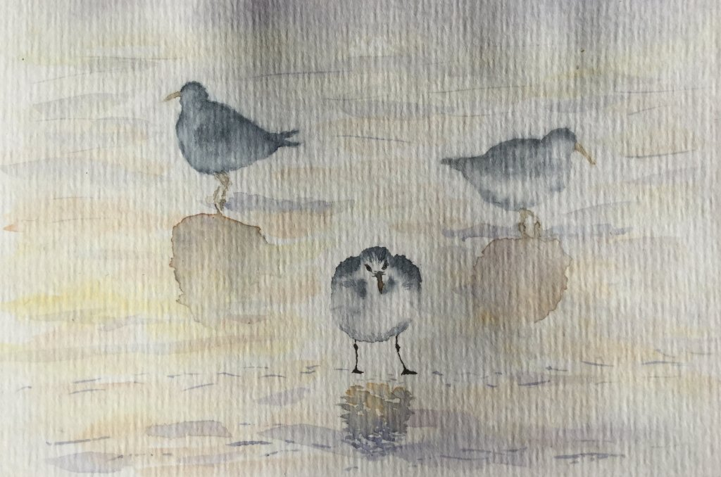 """Started preparing some postcards: these are """"bécasses"""" a type of bird well represented on l'I"""