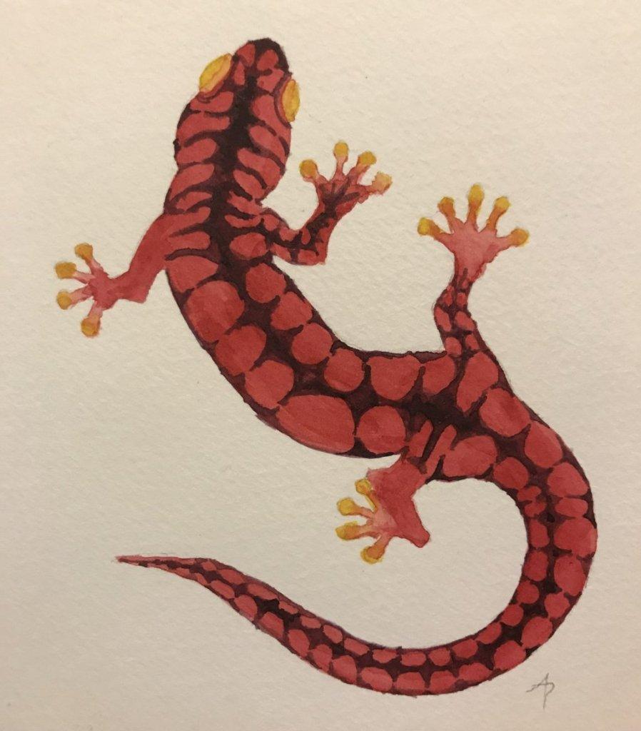Salamander logo sketch #1 4CDFA099-EC57-4A9D-AAFC-FB9339F5C340