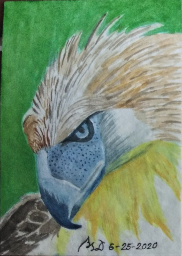 """Philippine Eagle"" 3.5 x 2.5 inches Watercolor on paper #WorldWatercolorMonth2020 Art Ca"
