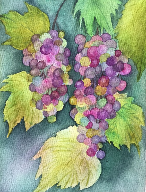 Colorful Grapes On Vine Watercolor Painting by Michelle Gonzalez