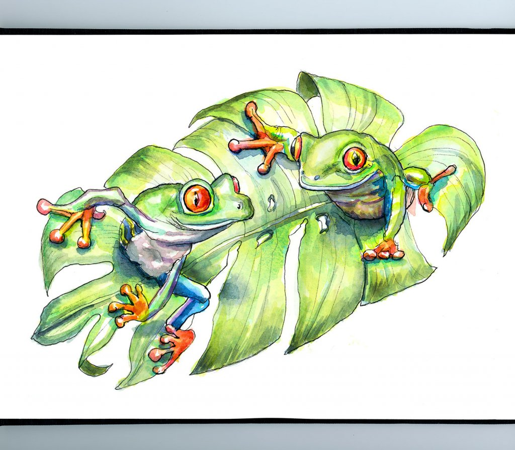 Two Tree Frogs On Monstera Leaf Watercolor Painting Illustration Sketchbook Detail