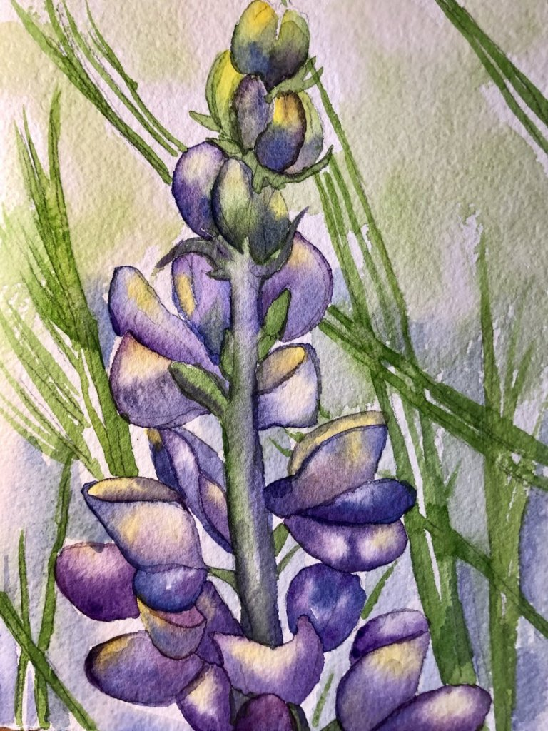 Day 5: My favorite color is the purple/blue in the lupine flower. E53832FB-57AE-4DB0-8CEC-D22CE24D42