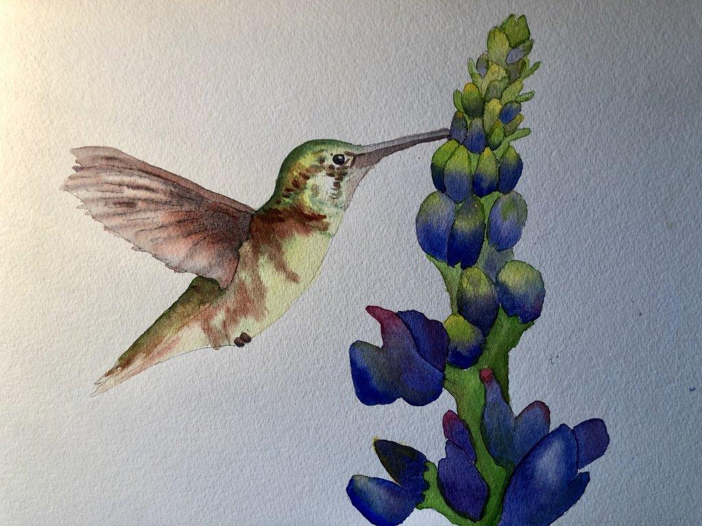 Day 10 FAST Hummingbird Hummingbird