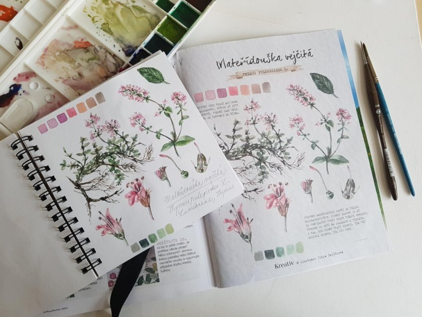 Sketchbook Watercolor by Jitka Zajíčková