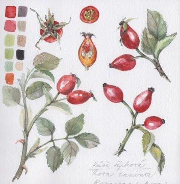 sipek watercolor painting