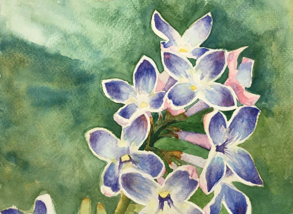 Lilacs with picotee white edge 113DE8D9-79EE-49AD-9531-575B0F739B0E