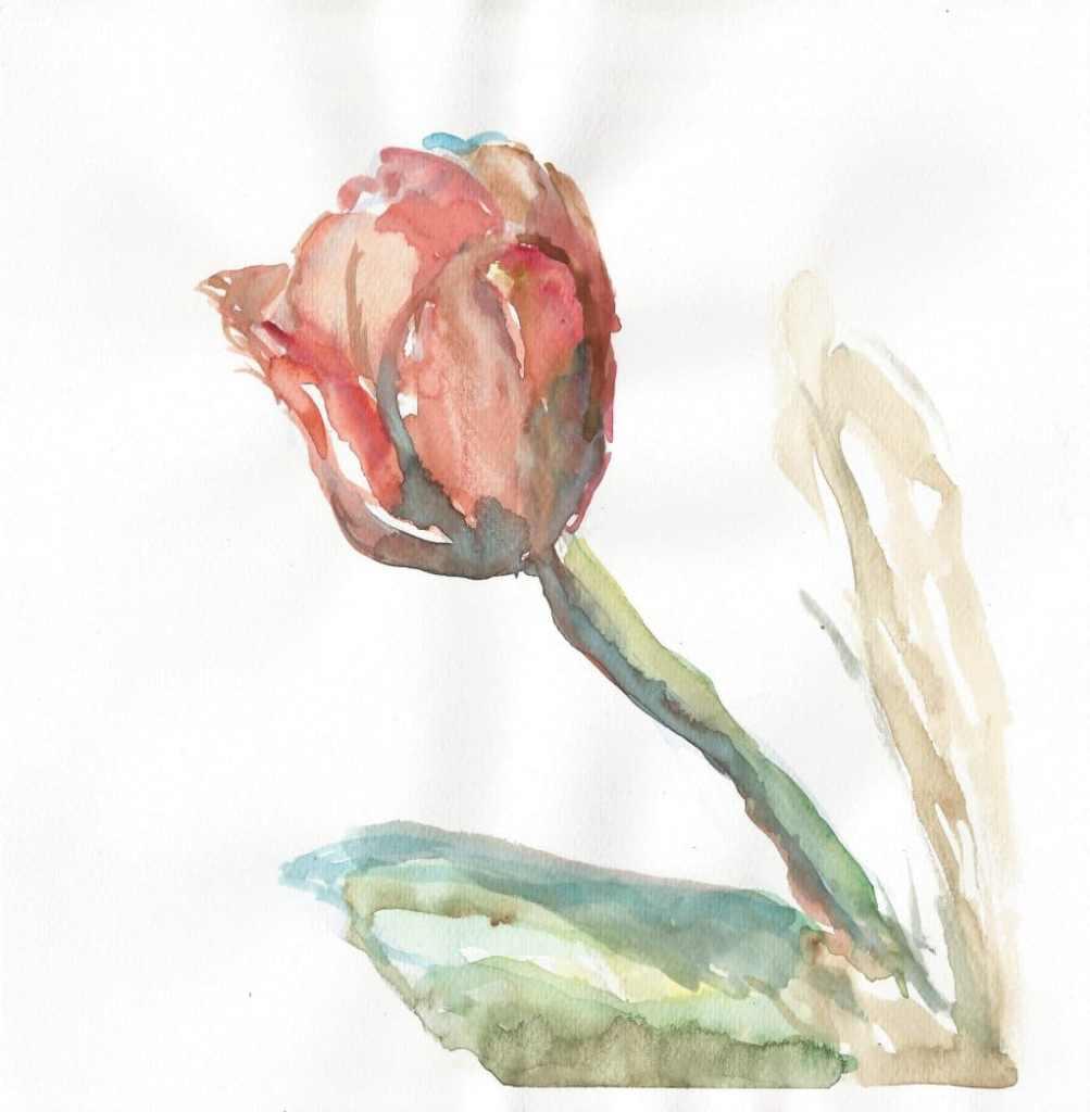 Red tulip, watercolor, small size, 2020 r 27(1)_21x21.7_2020
