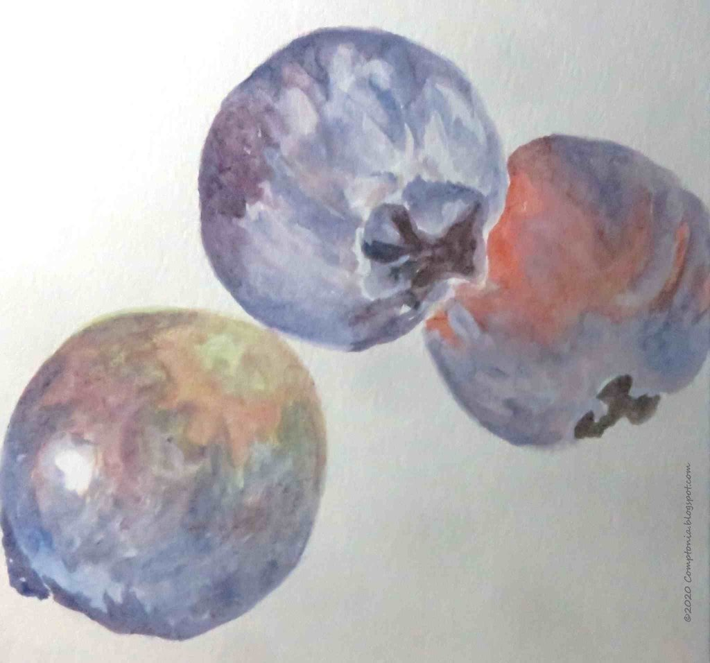Blueberries – excellent models for practicing color mixing 🙂 AUG 14 2020