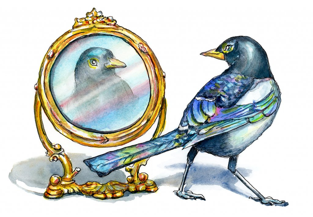 Magpie Bird Self Aware Looking In Mirror Watercolor Painting Illustration