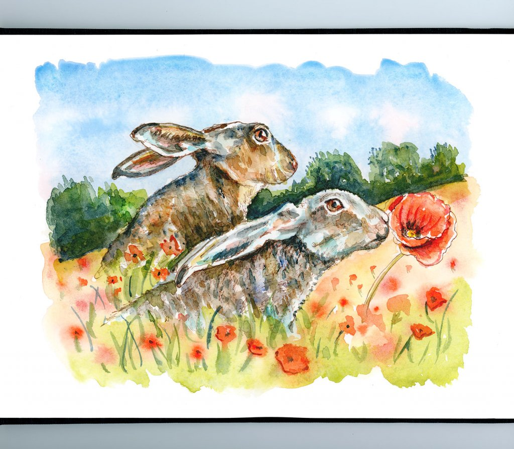 Hares In Poppy Field Rabbits Watercolor Painting Illustration Sketchbook Detail